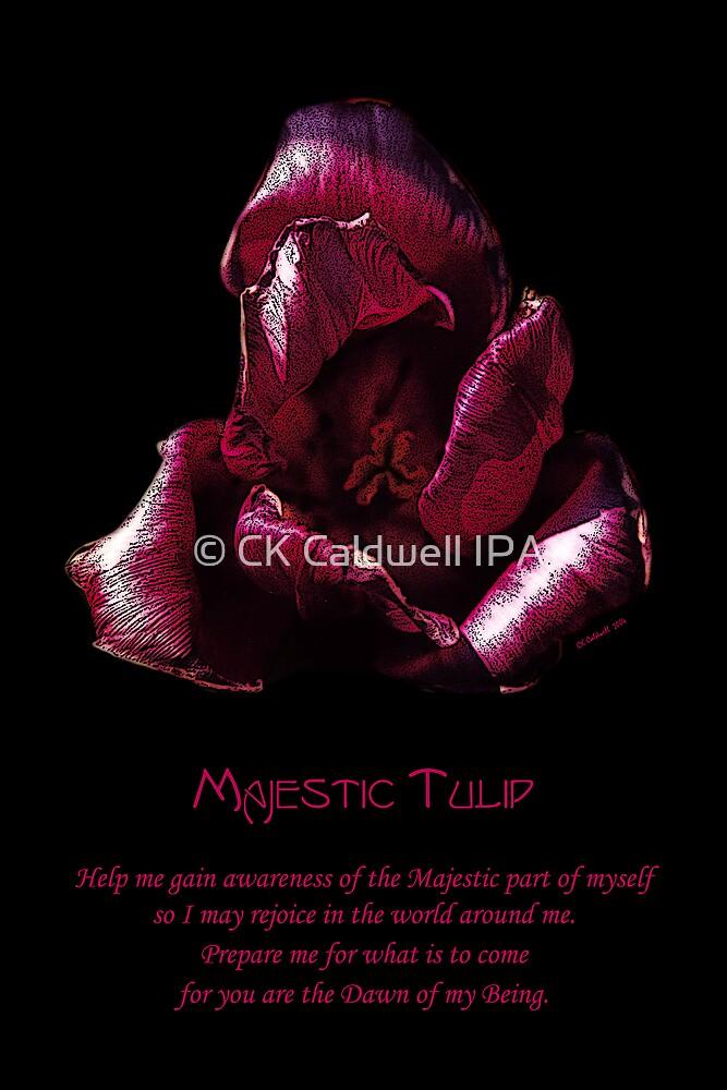 Majestic Tulip by © CK Caldwell IPA