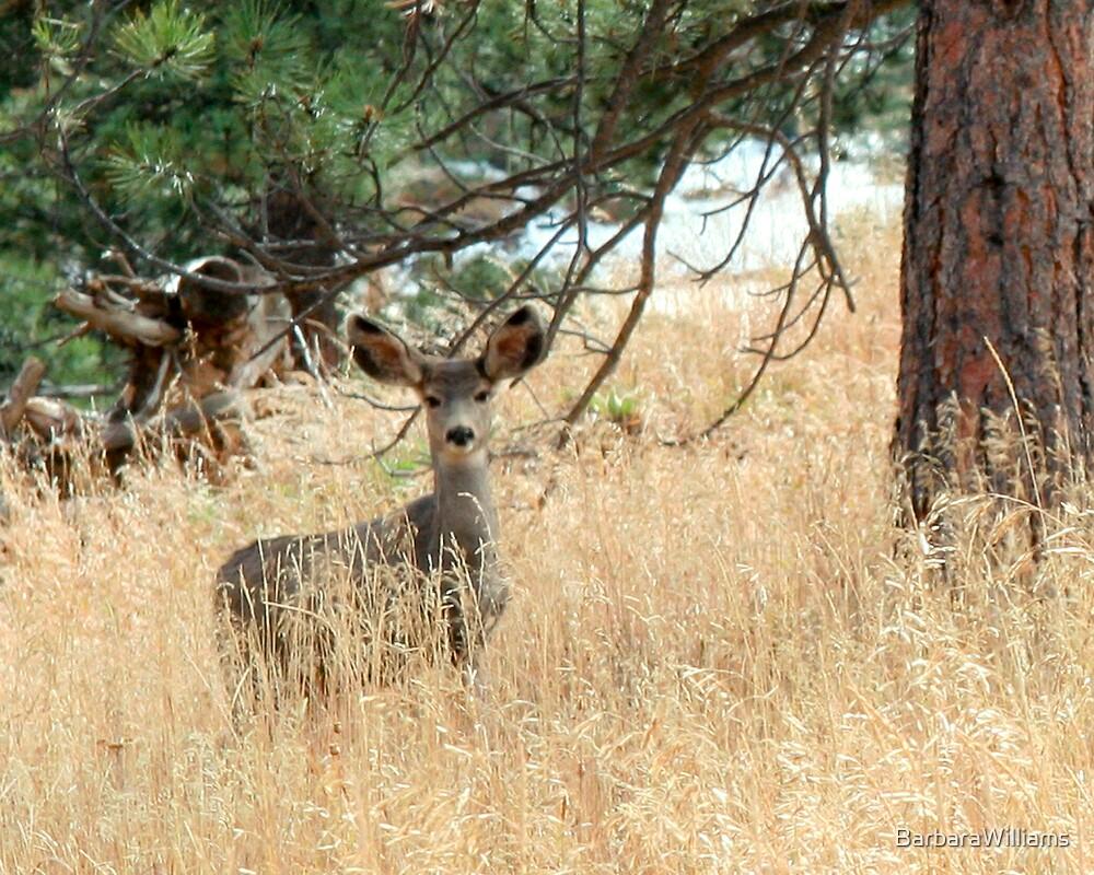 Mule Deer by BarbaraWilliams