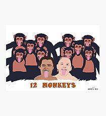 Twelve Monkeys Photographic Print