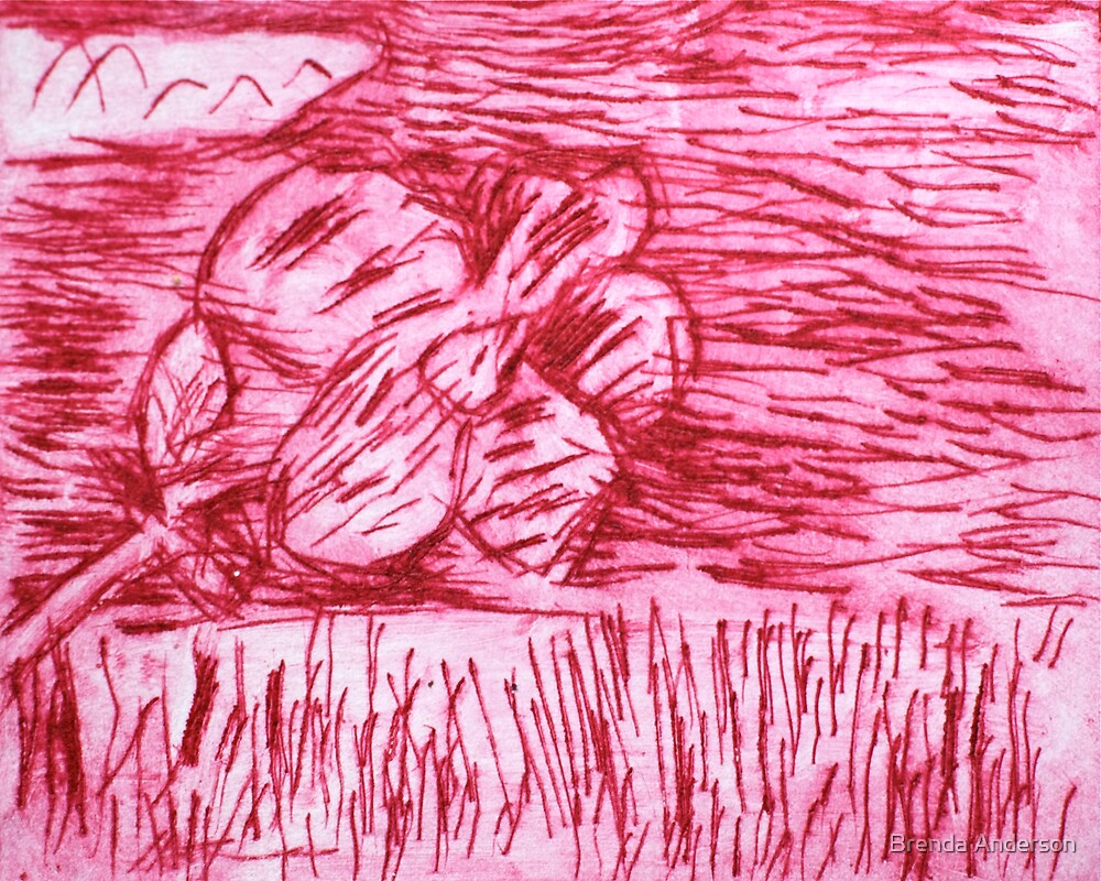 pink flower in meadow by Brenda Anderson