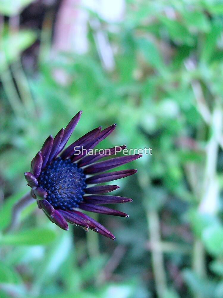 Pretty Purple Picture by Sharon Perrett