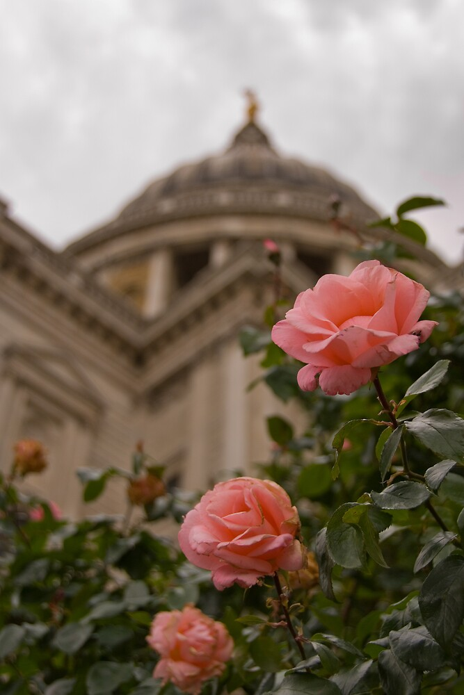 Rose By St Pauls by Craig Goldsmith