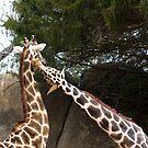 Giraff Love by Jerry  Mumma