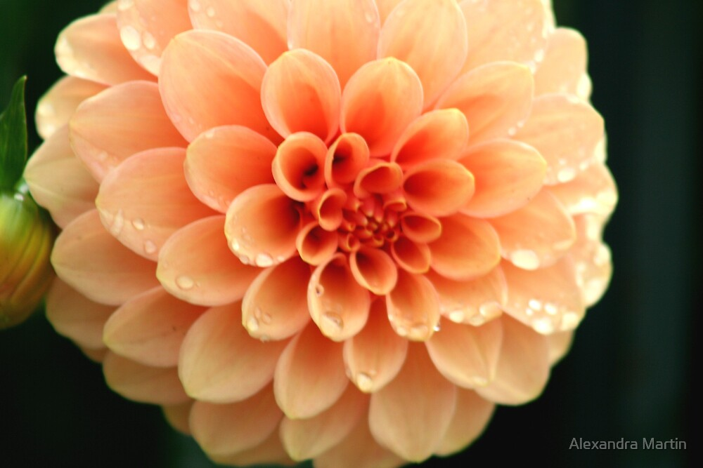Peachy by Alexandra Martin