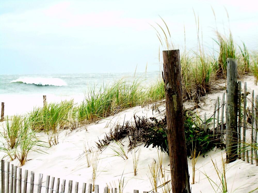 Grassy dunes by Jen29