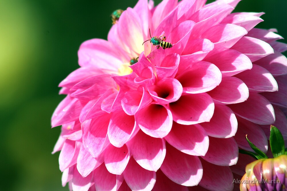 Busy Bees by Alexandra Martin