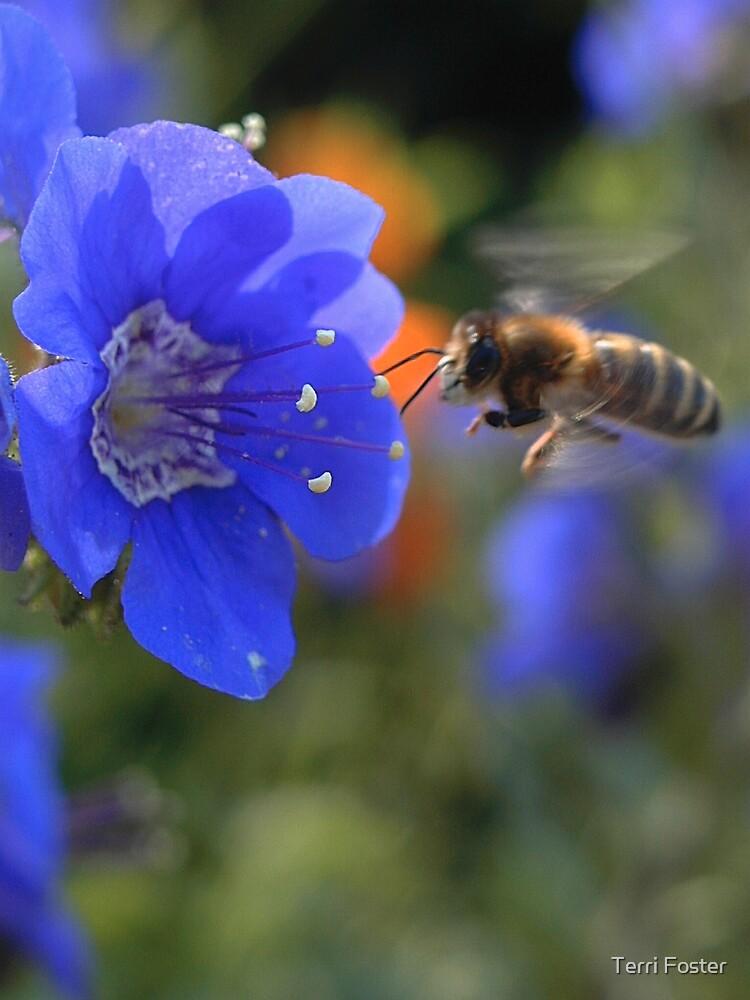 Bee by Terri Foster