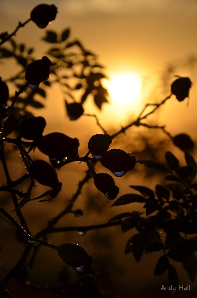 Sunrise through the rain by Andy  Hall