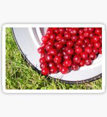 Cherry fruit Sticker
