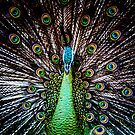Peacock by PristineImages