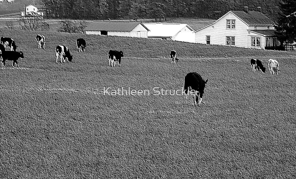 Amish Farm by Kathleen Struckle