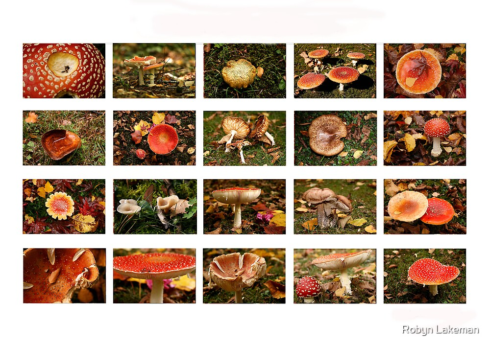 Mushrooms in our garden by Robyn Lakeman