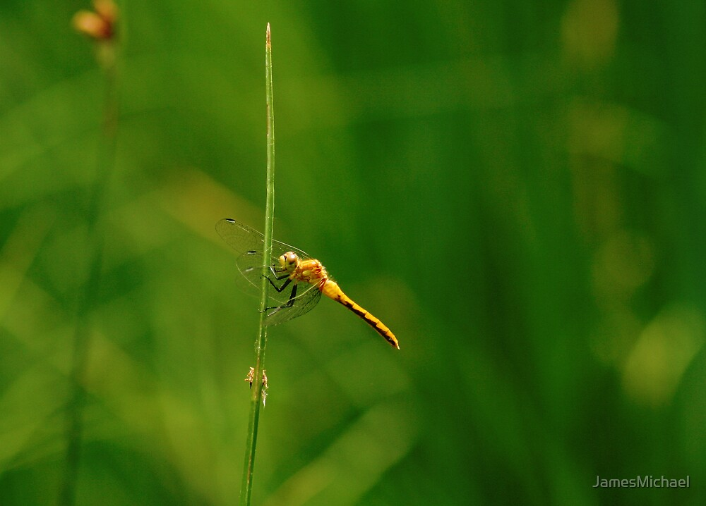 Dragonfly on Point by JamesMichael