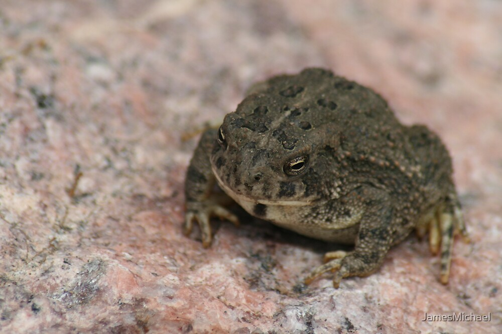 Toad by JamesMichael