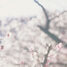Plum Trees and Morning Light in Spring by Yuko Yamada