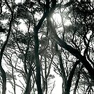 tree shapes by eclipse