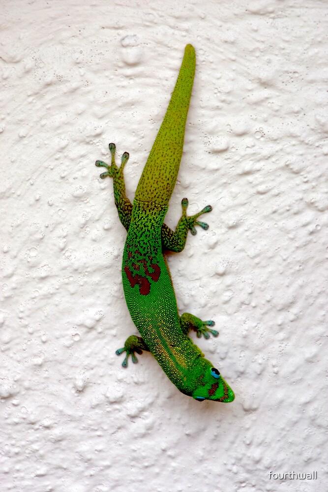 Gecko by fourthwall
