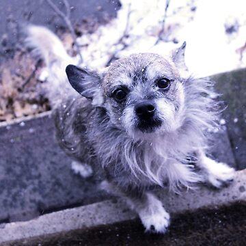 Winter doggo by twilightmoon