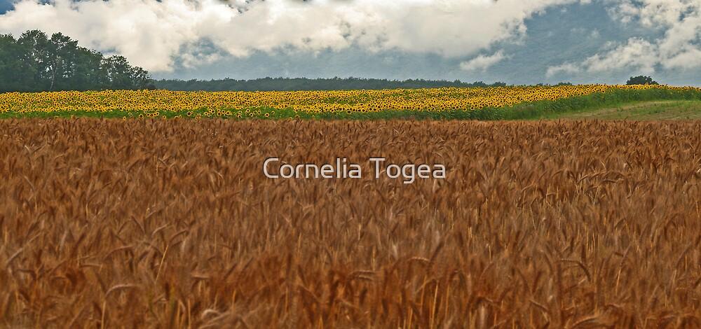 summer fields by Cornelia Togea