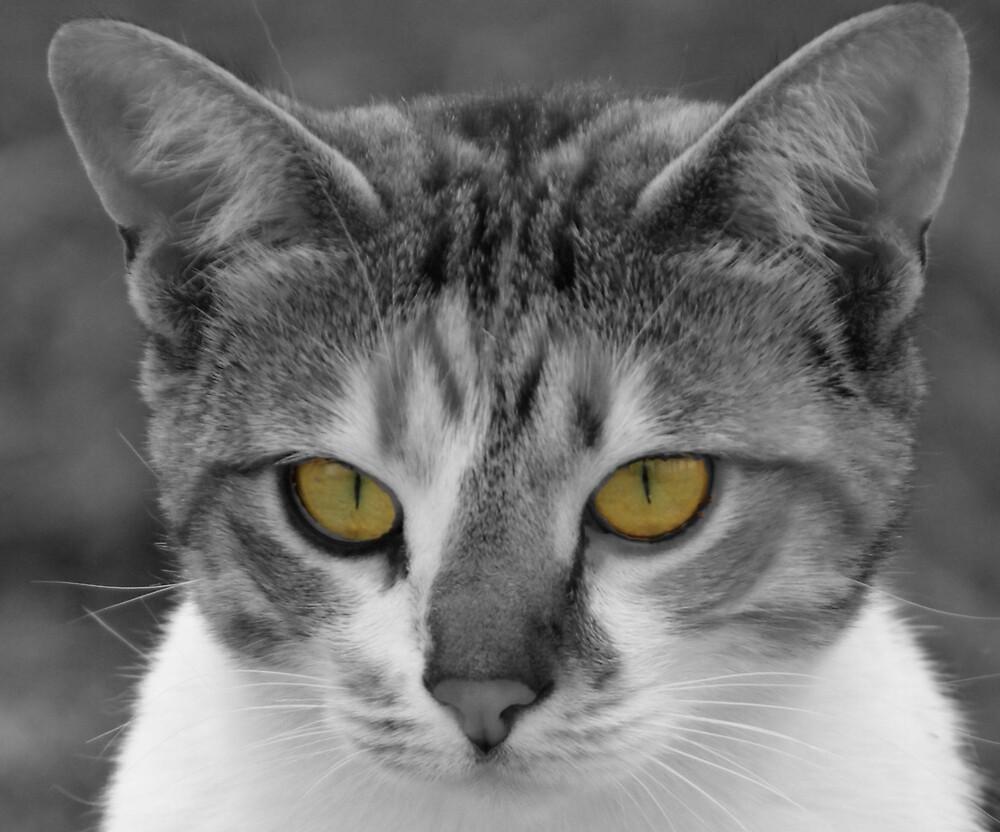 Cats eyes by Wazi