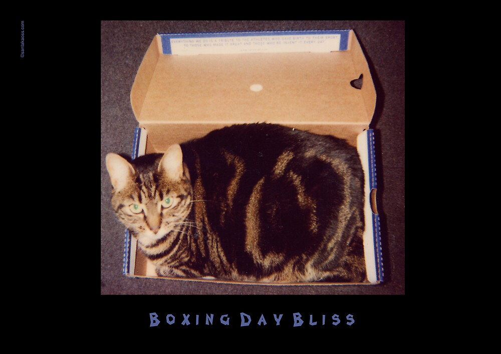 More Boxing Day Bliss by santakaoss
