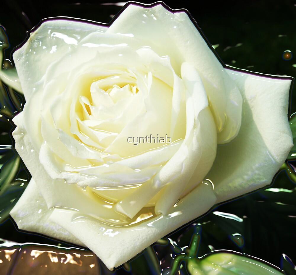 rose white by cynthiab