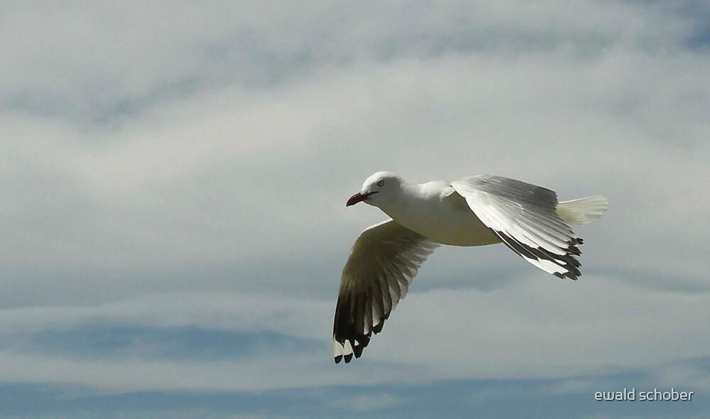 seagull by ewald schober