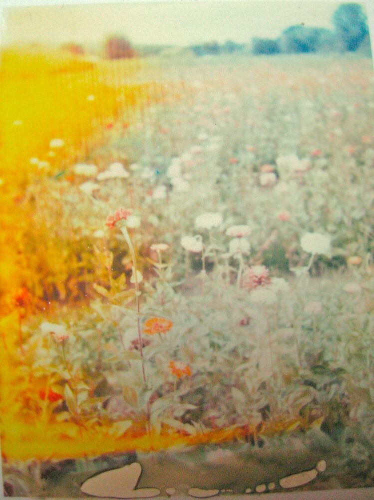 Sauvie Island Flowers by jalexanderart