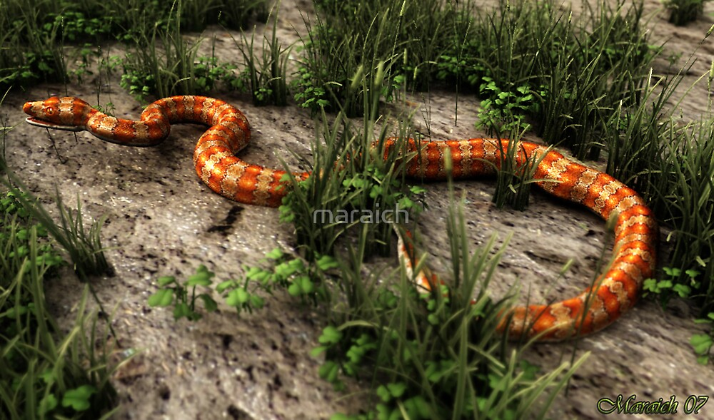 Snake in the Grass (Revisited) by maraich