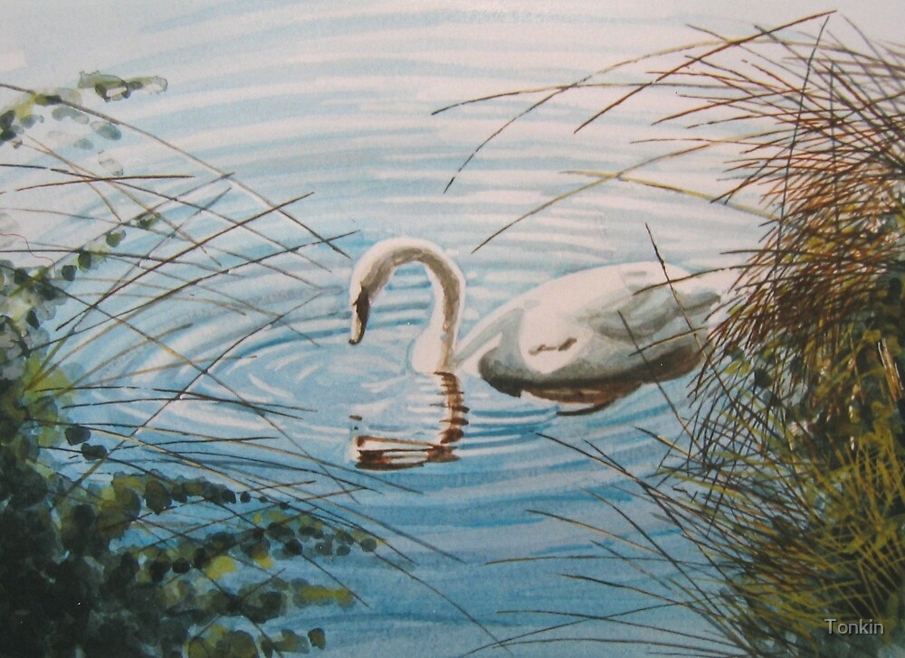 Swan by Tonkin