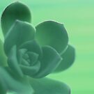 Rainbow flowers Green cactus 10 by Emergy