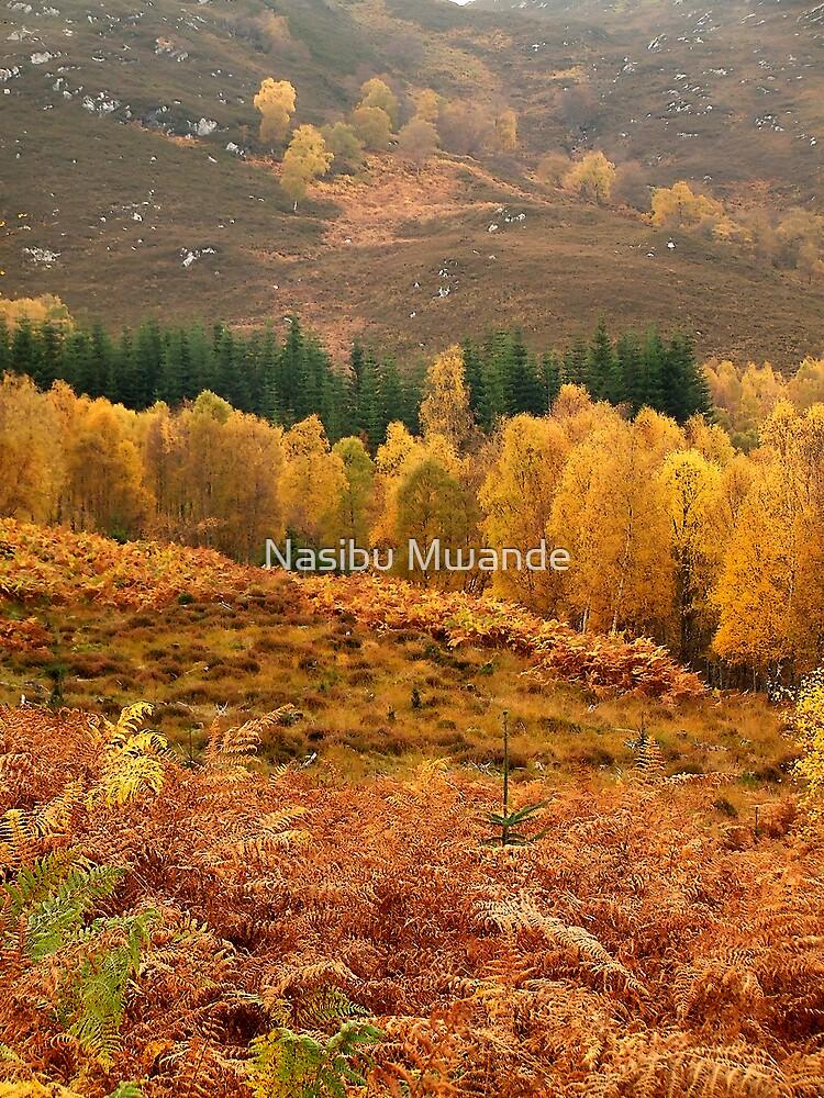 Autumn Colours by Nasibu Mwande
