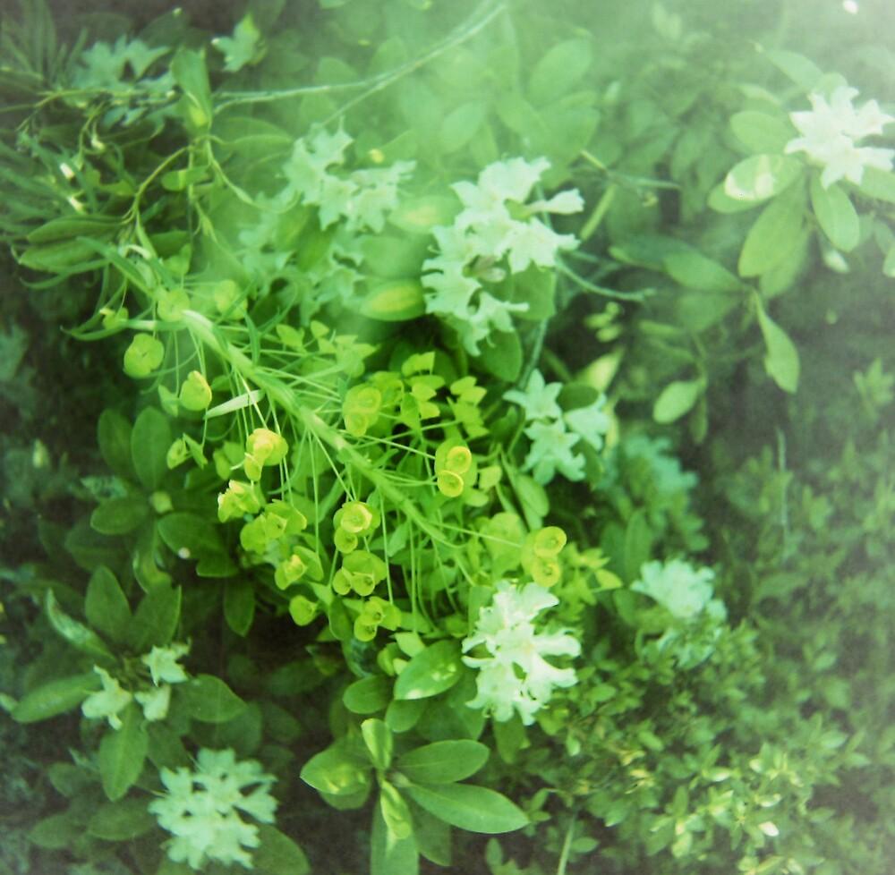 Green by jalexanderart