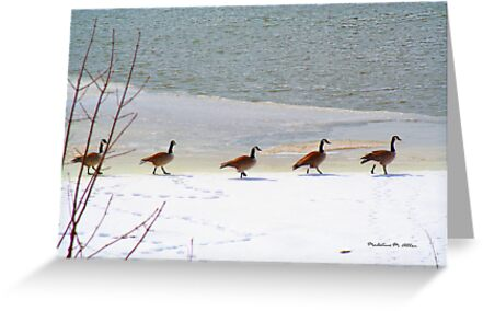 Follow The Leader by Madeline M  Allen