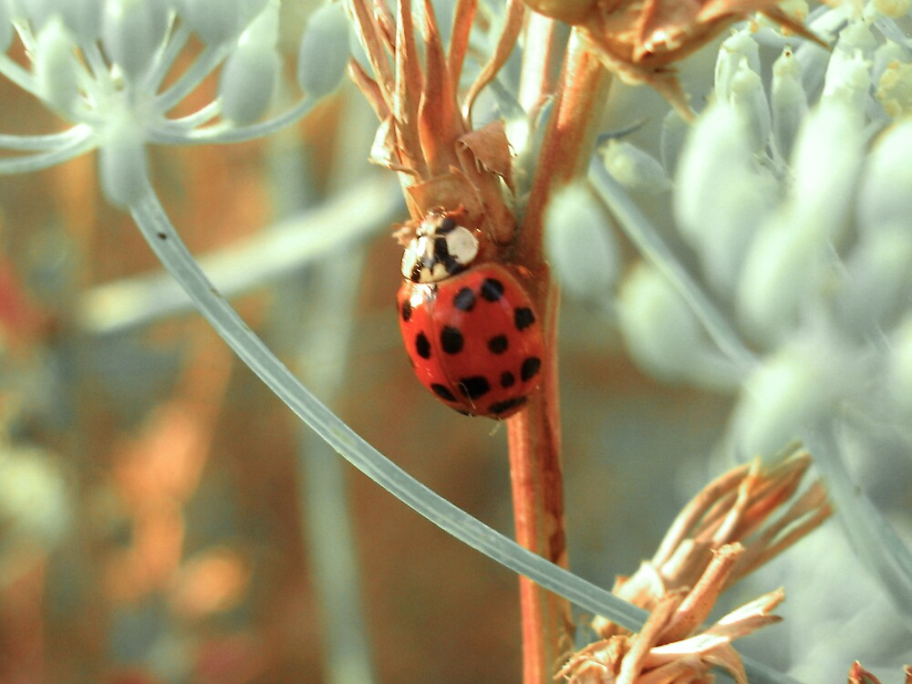 LadyBug and Fennel by jalexanderart