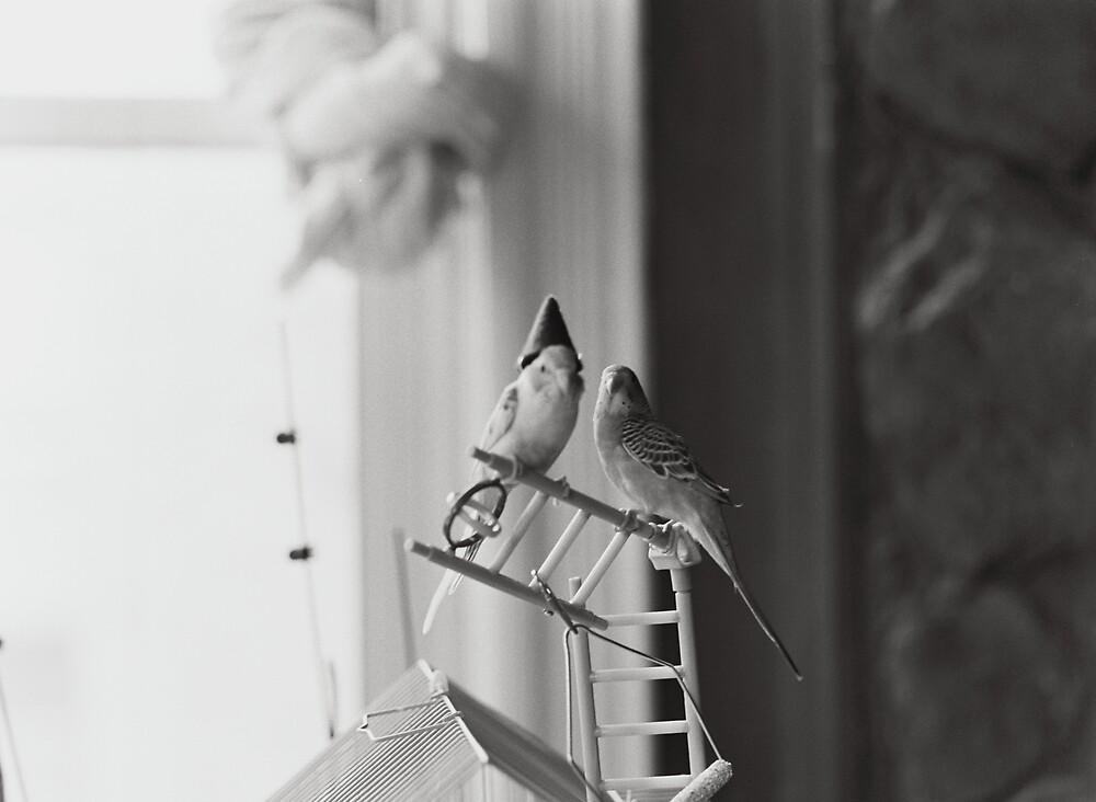 Two Birds One Hat by jalexanderart
