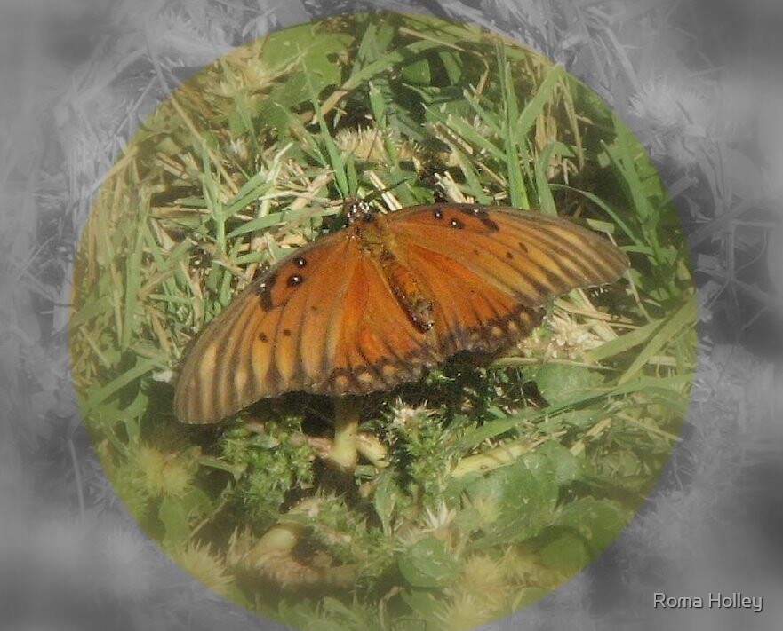 Butterfly at rest by Roma Holley