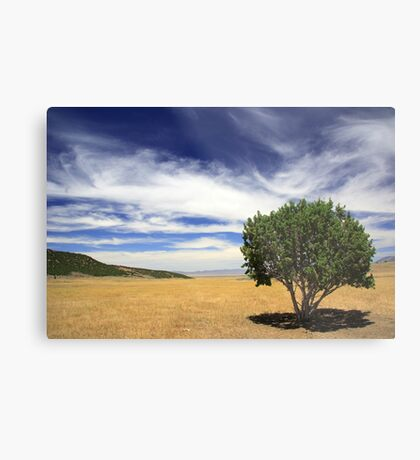 The Only Shade Metal Print