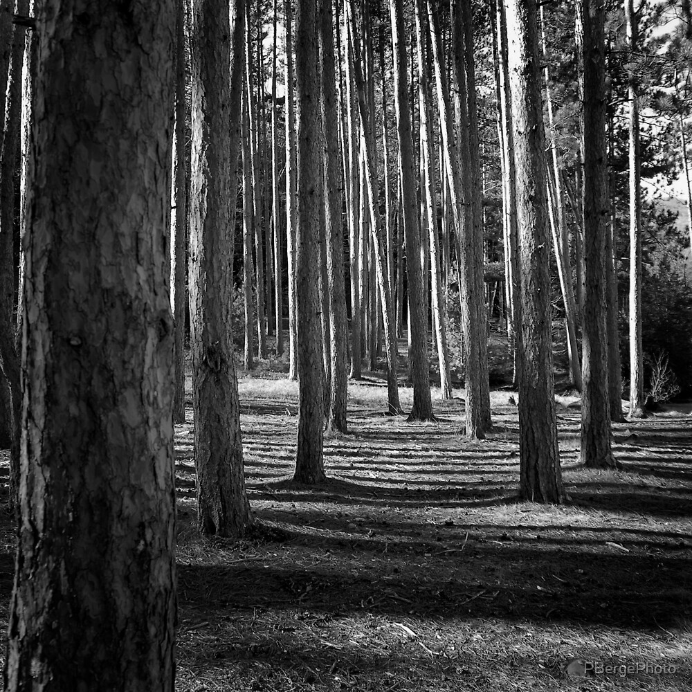 Black and White Forest by PBergePhoto