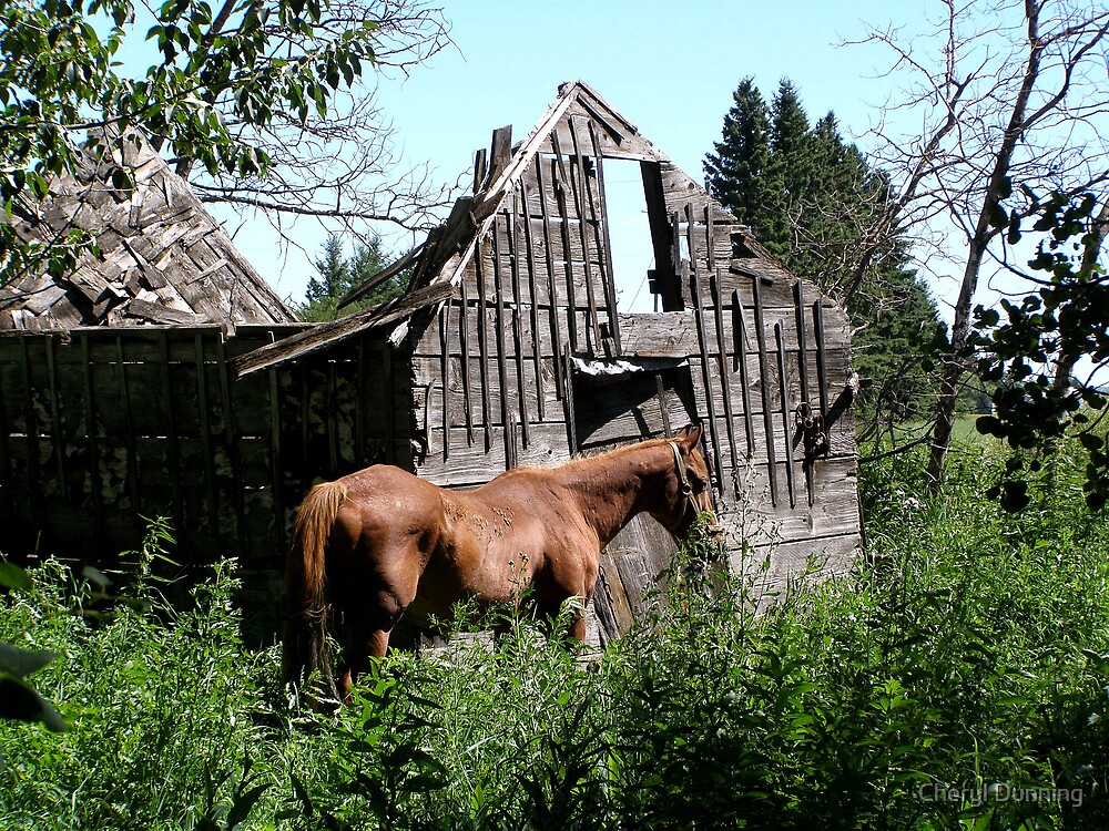 horse by shed by Cheryl Dunning