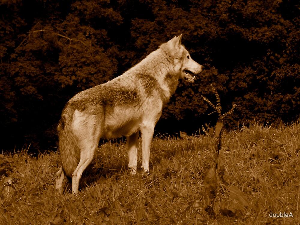 Wolf by doubleA