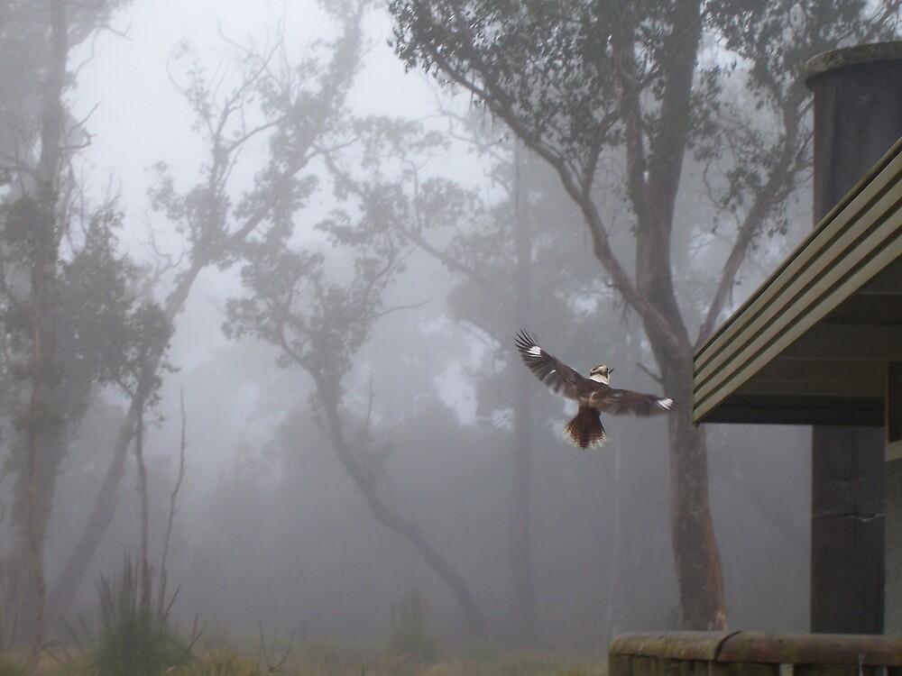 kookaburra by gaylene