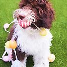 Labradoodle Easter Egg Hunt by daphsam