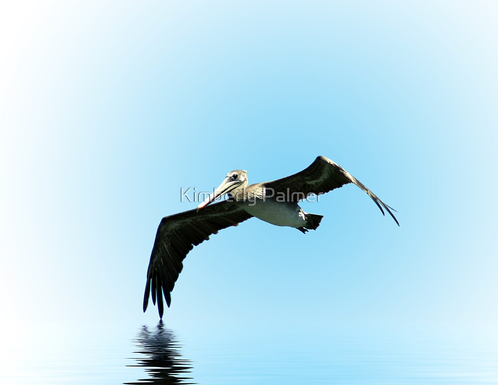 Pelican Dance by Kimberly Palmer