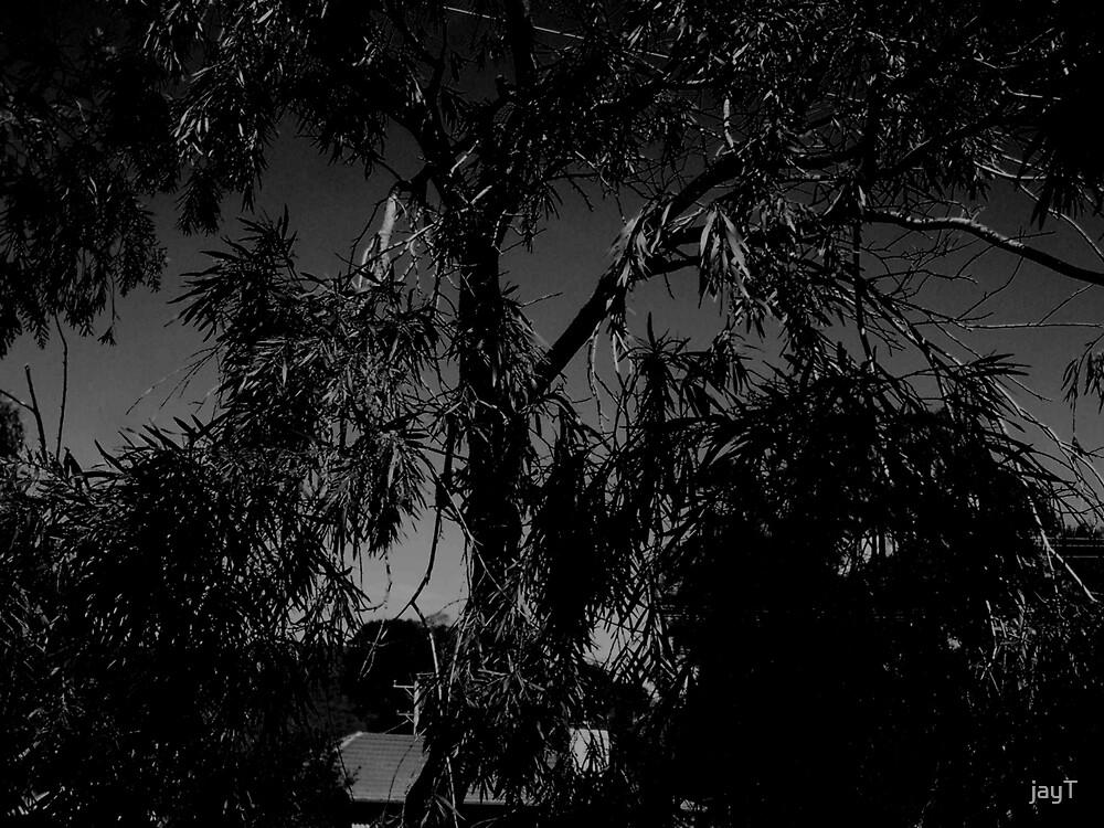 leaves by jayT