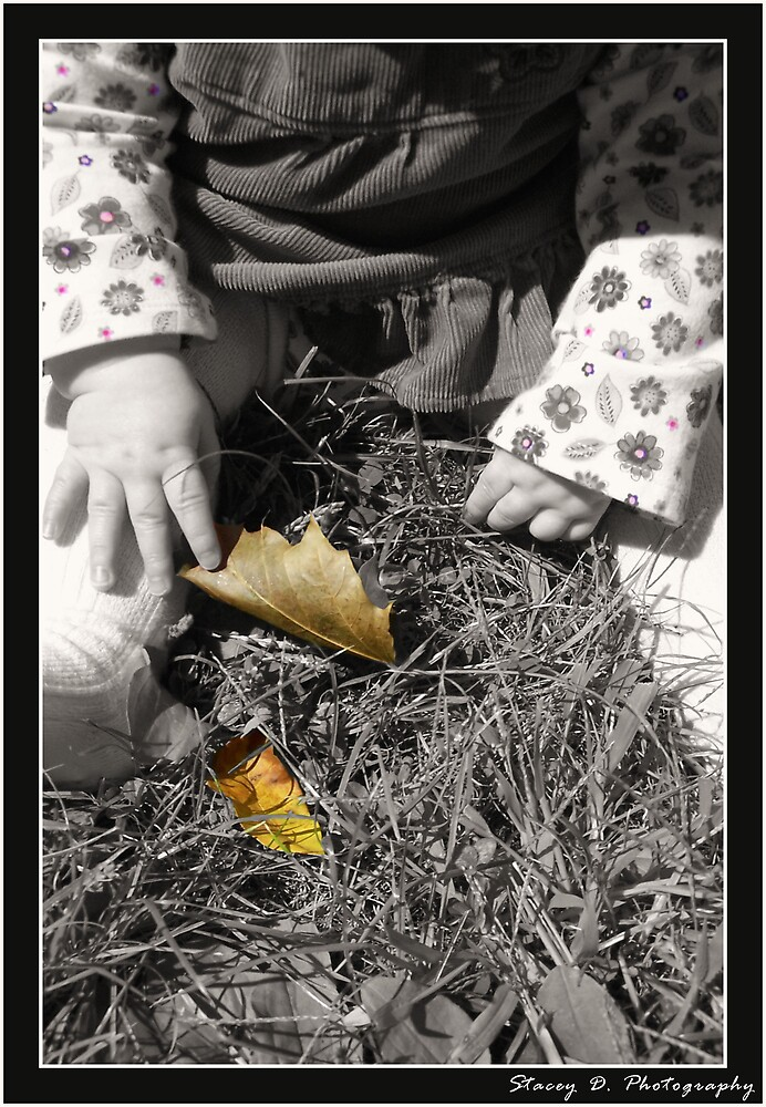 Fall Discoveries by Stacey Milliken
