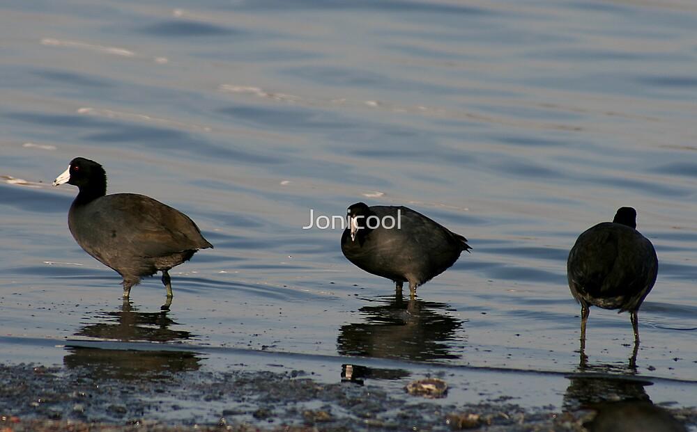 Ducks in a Row by Jonicool