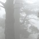 trees in fog by eclipse