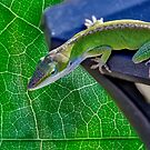 Todays Anole by TJ Baccari Photography