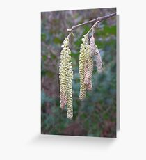 catkins ? Greeting Card